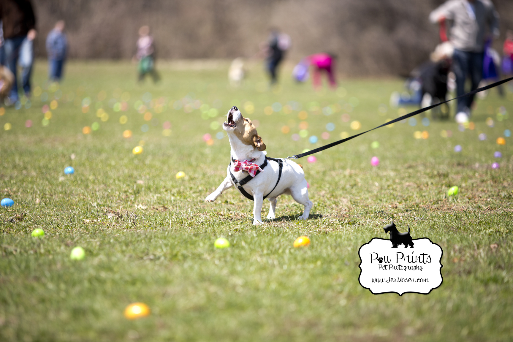 {Happy Dogs Daycare} Easter Bone Hunt 2014 to benefit Fort ... - photo#17