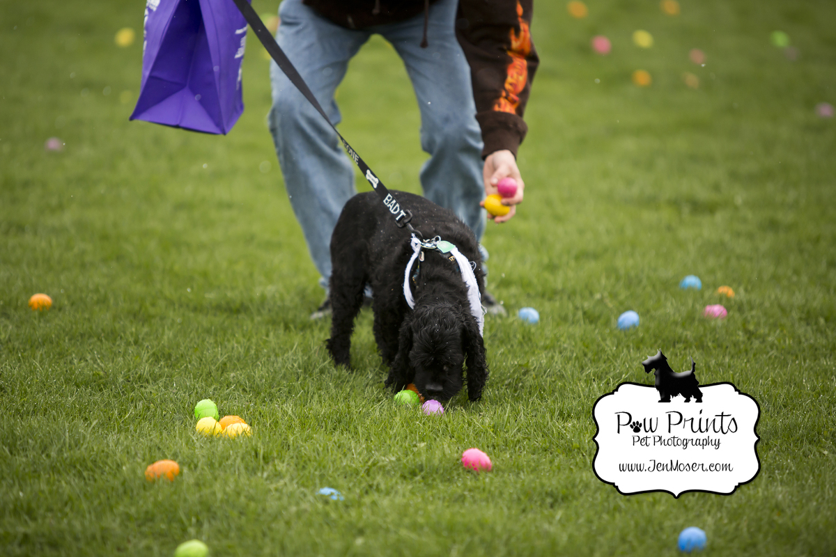 {Happy Dogs Daycare} Easter Bone Hunt 2016 to benefit Fort ... - photo#36